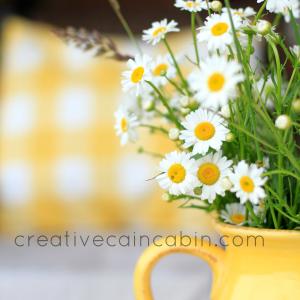 Wildflower Series ~ Daisy {2013}