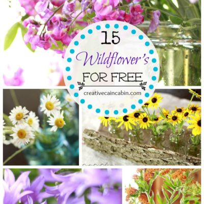 15 Wildflower's You Can Find For FREE