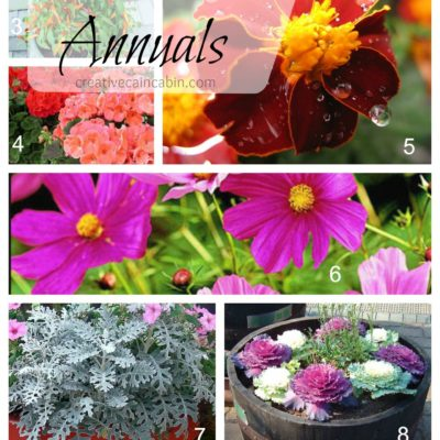 Top 10 Drought Tolerant Annuals