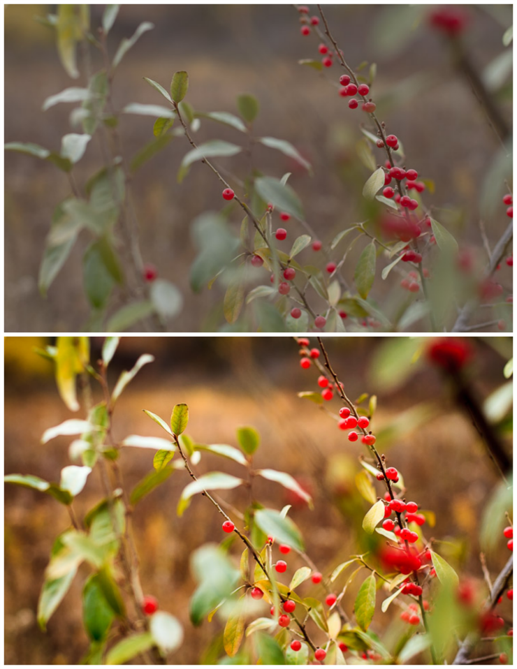 Before & After Berries