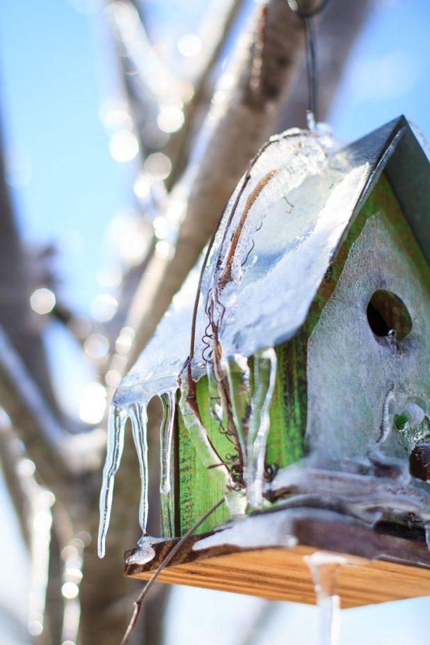 Bird House in Winter