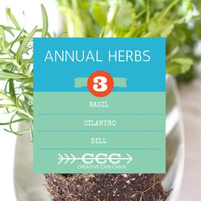 annual herbs