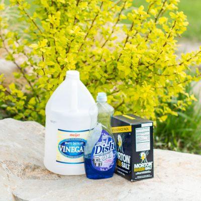 Dandelion Time = Organic Weed Killer