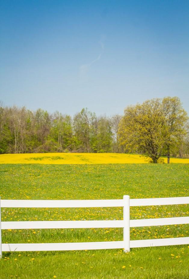 Countryside   Wild Mustard Field   Pure Michigan   Country Living   https://twitter.com/CCainCabin   www.facebook.com/creativecaincabin   http://www.pinterest.com/dawncain/   #Michigan #CountryLiving
