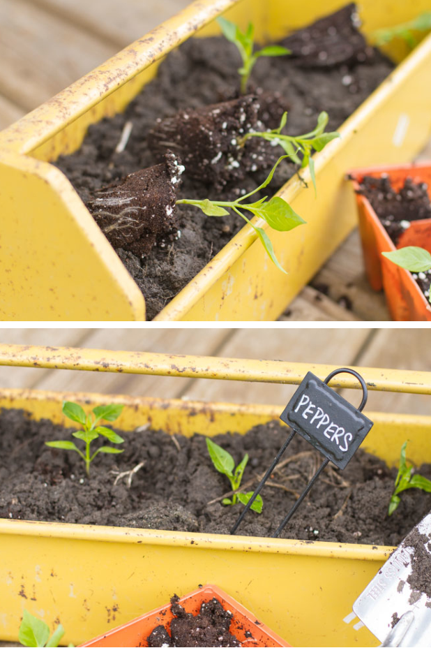 Container Gardening |Use the Unexpected | Use Container You Already Have |Twitter.com/CCainCabin | pinterest.com/dawncain/ | #ContainerGardening