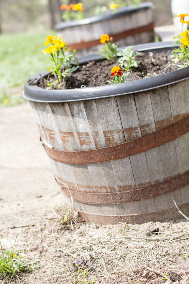 Whiskey Barrel Container Garden, Cherry Tomato Plant and Marigolds