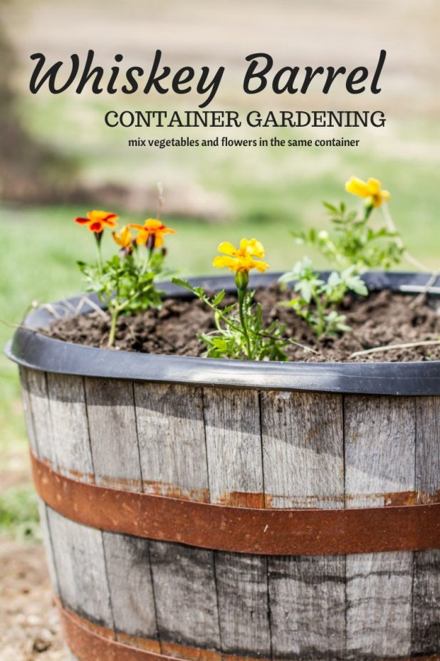 Whiskey Barrel Container Garden Mix Ve able and Flowers in the Same Container
