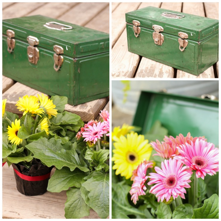 Gerber Daisy's in a Rusty Tool Box | Gerbera Daisy | Container Gardening | Creative Cain Cabin
