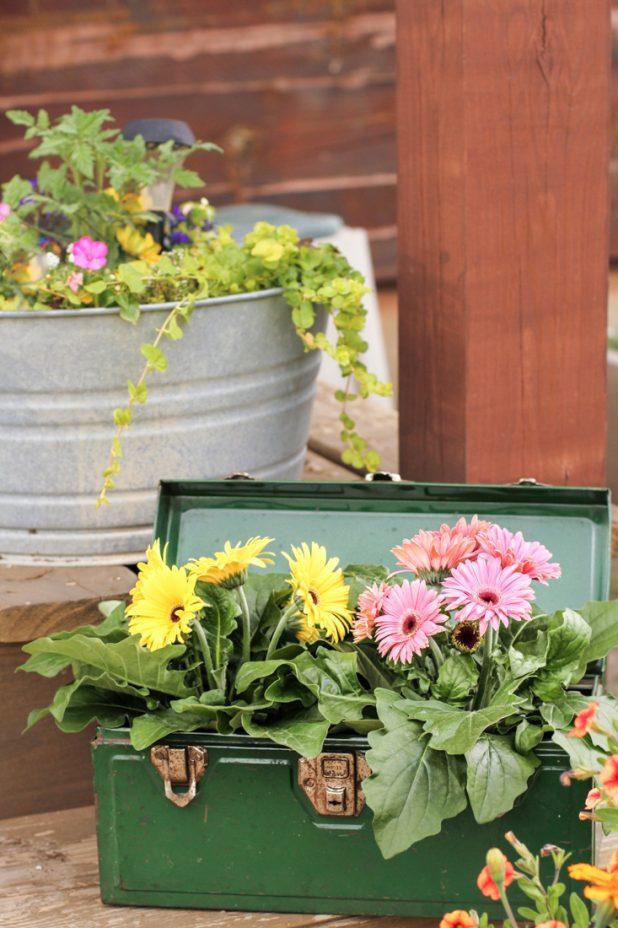 Gerbera Daisy   Container Gardening   Creative Cain Cabin