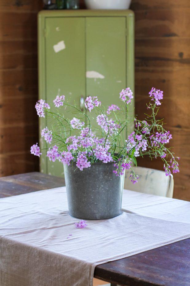 Wild Phlox   Wildflowers   Creative Cain Cabin