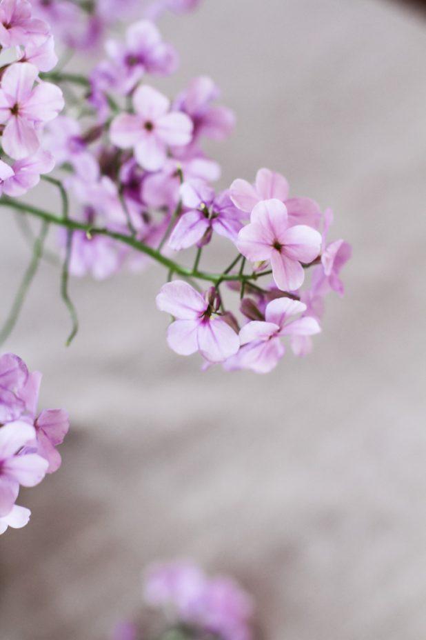 Wild Phlox | Wildflowers | Creative Cain Cabin
