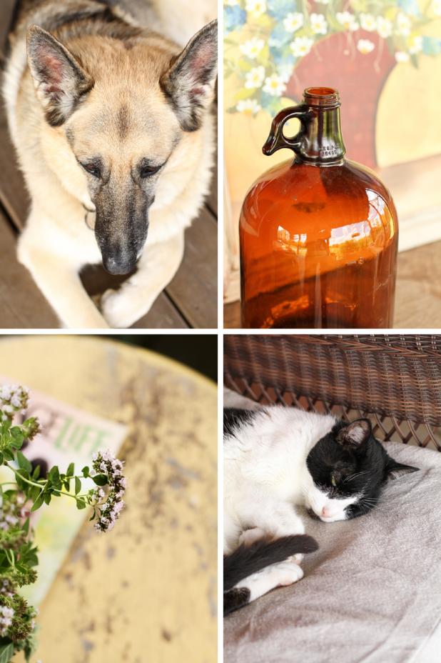 Dog | Whiskey Jug | Oregano | Cat | Creative Cain Cabin