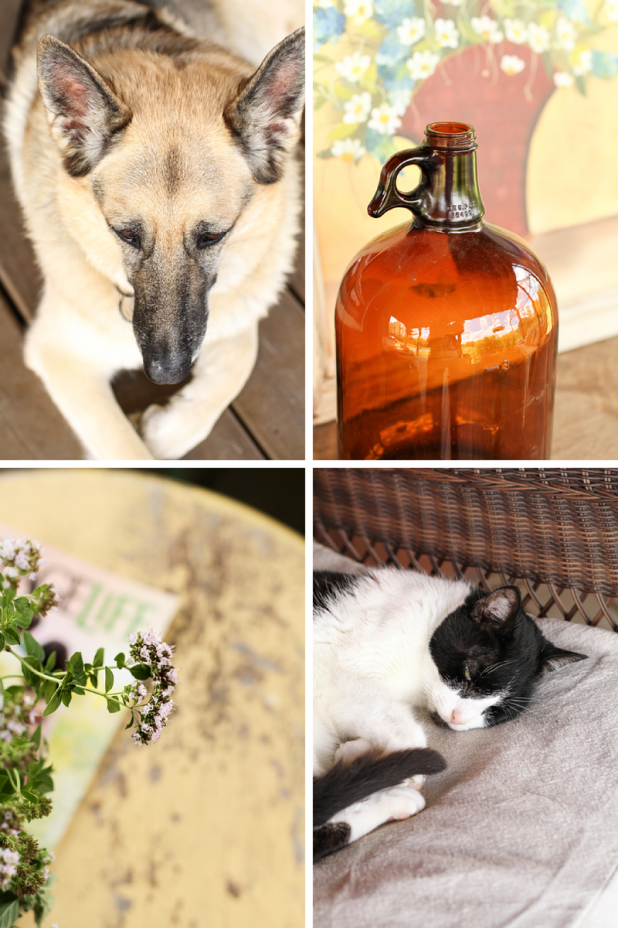 Dog | Whiskey Jug | Oregano | Cat | Creative Cain Cabin