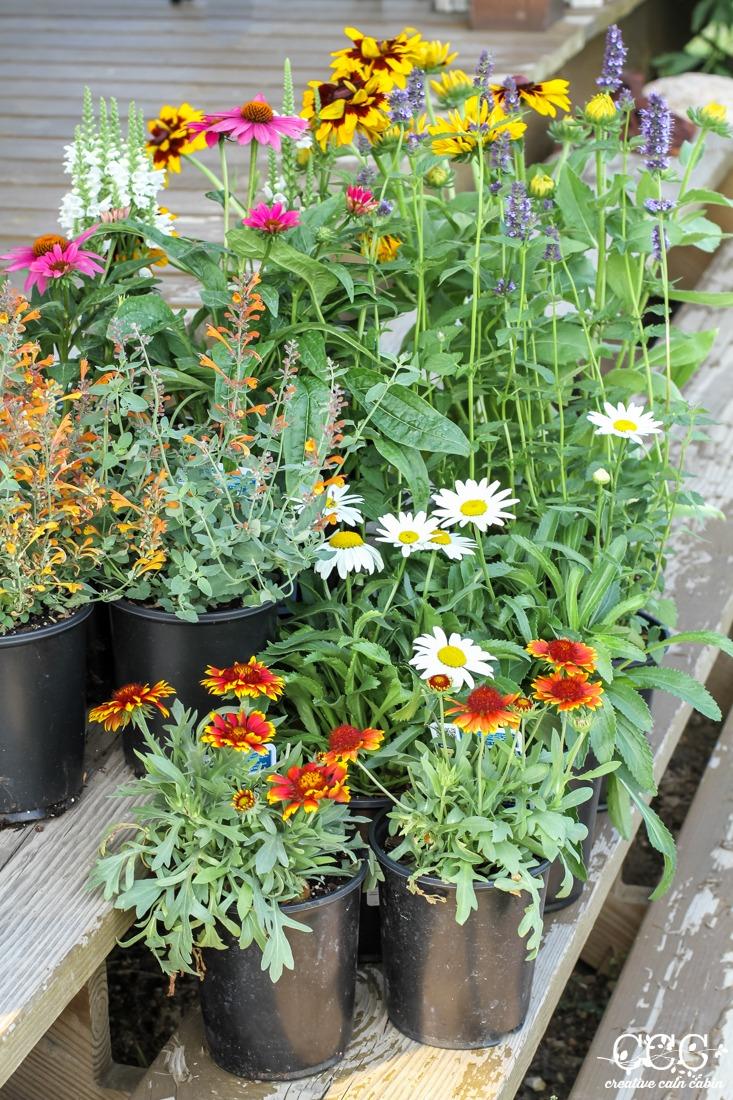 Perennial Flower | Creative Cain Cabin