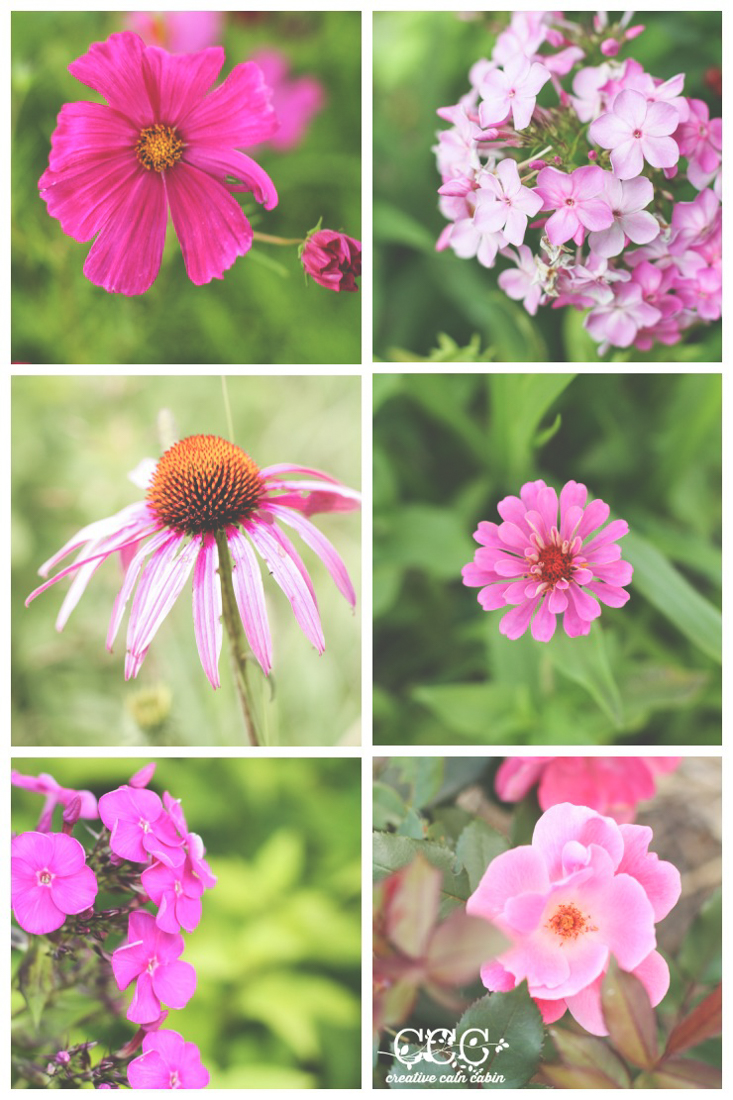 Pink Blooms   Creative Cain Cabin
