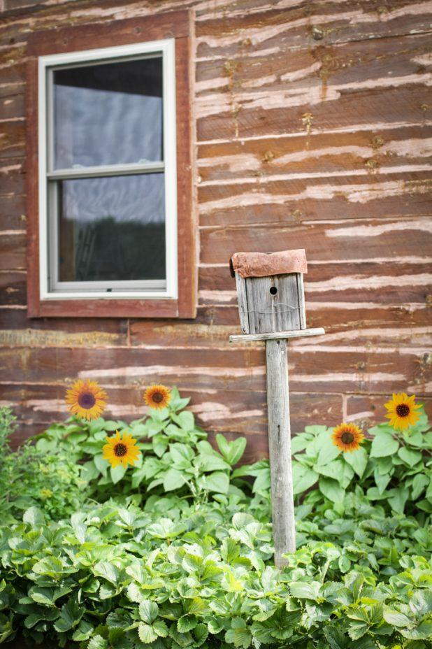 Birdhouse   Sunflowers   Log Cabin   Creative Cain Cabin