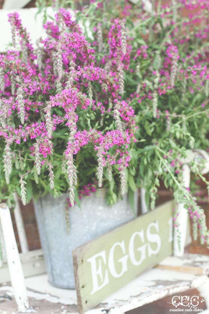 Purple Loosestrife | Wildflower | Creative Cain Cabin