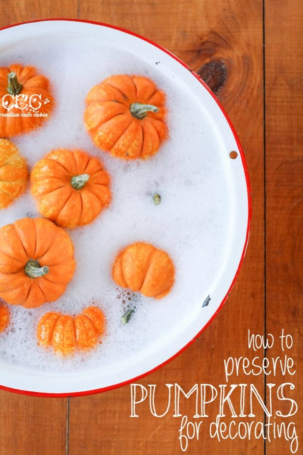 How to Preserve Pumpkins For Decorating   Creative Cain Cabin