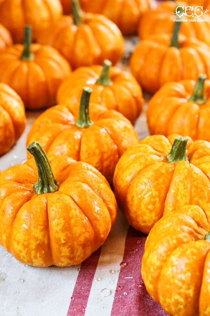 How to Preserve Pumpkins For Decorating | Creative Cain Cabin