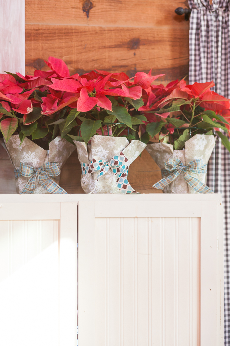 Affordable Hostess Gift Anyone Can Make | All You Need is a Poinsettia Plant, Wrapping Paper, and Ribbon | creativecaincabin.com