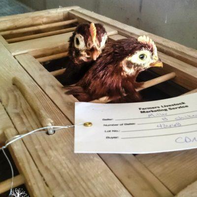 Chicken Coop Build Part 1