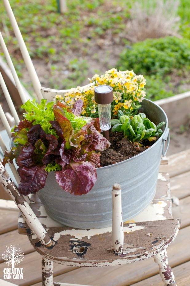 Rustic Edible Filled Galvanized Bucket | Container Gardening | Porch Gardening | CreativeCainCabin.com