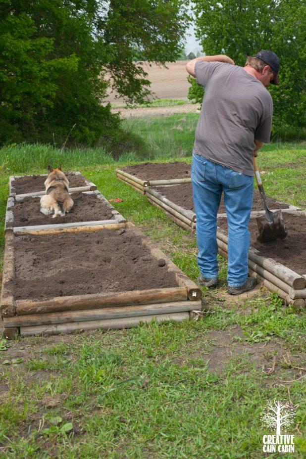 Raised Garden Beds | CreativeCainCabin.com
