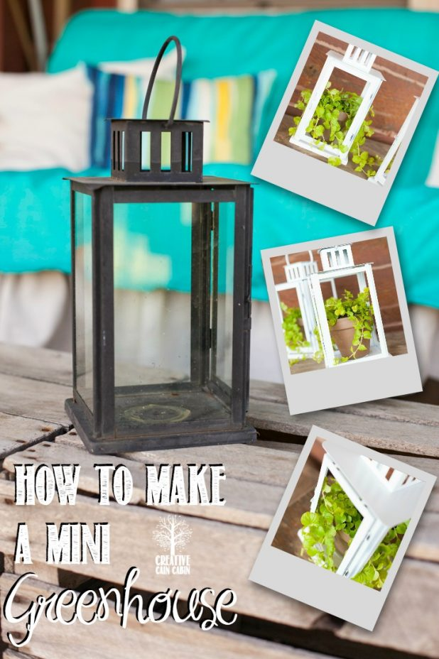 How to Make a Mini Greenhouse From an Old Lantern   CreativeCainCabin.com