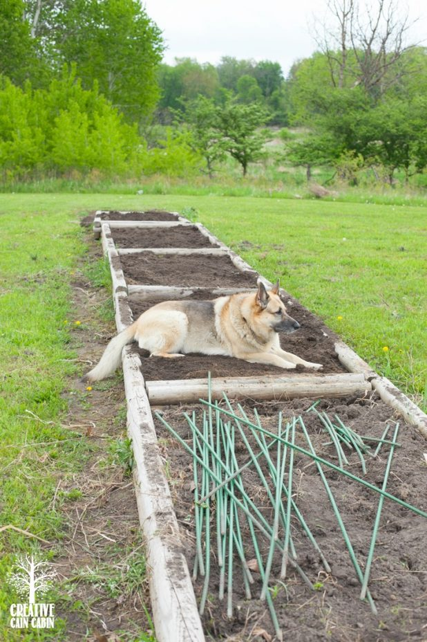Raised Garden Beds | CreativeCainCabin.com