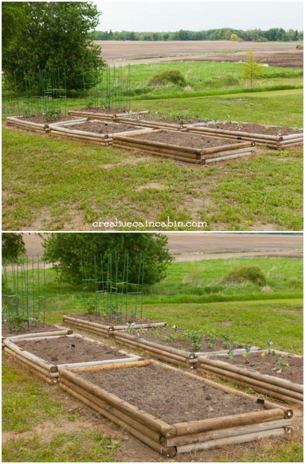 Planted Raised Garden Beds   CreativeCainCabin.com