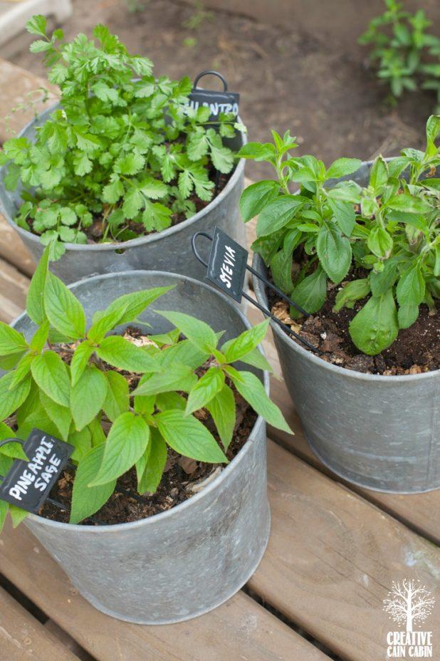 Potted Herbs   Container Garden   CreativeCainCabin.com