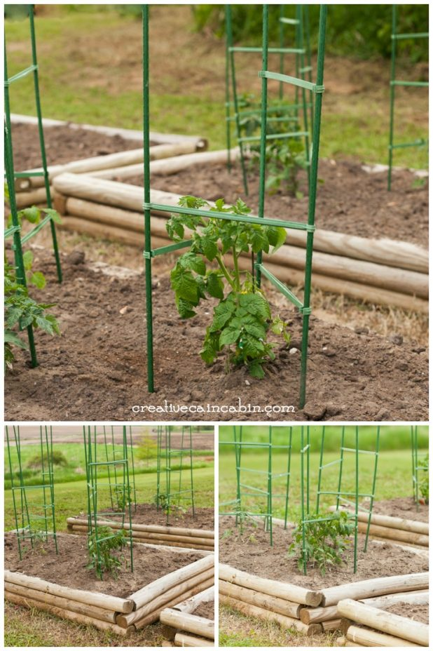 Tomato Plants & Cages | Raised Bed Garden | Vegetable Garden | CreativeCainCabin.com