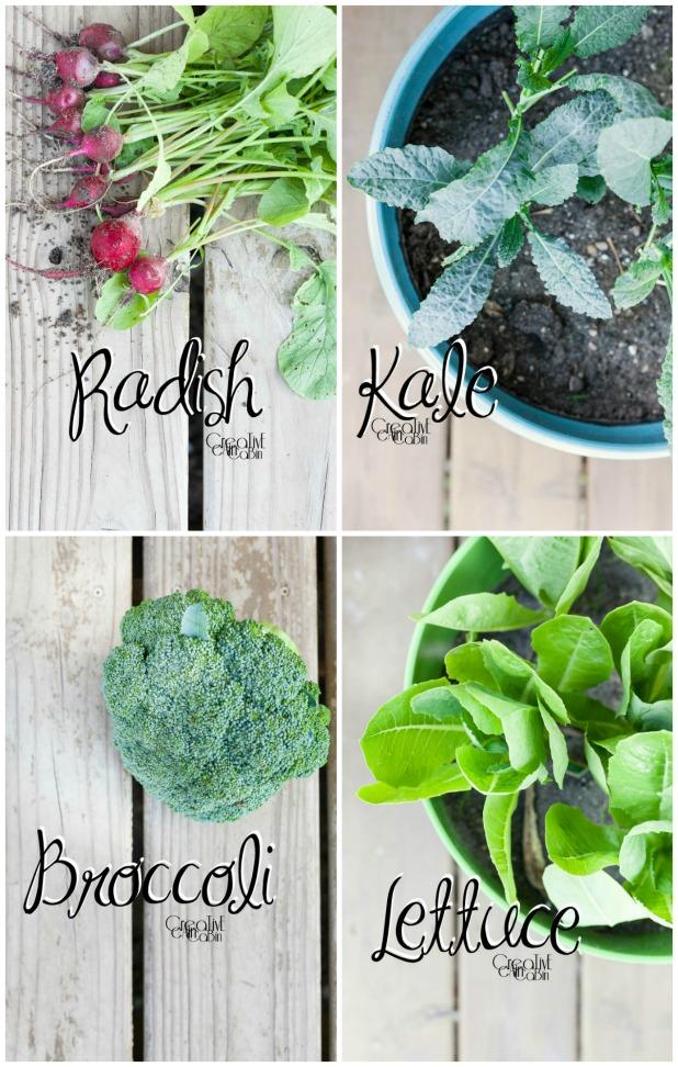 Container Garden Plants | Kale | Lettuce | Radish | Broccoli | Organic Vegetables | Garden | Vegetable Garden | Harvest | CreativeCainCabin.com