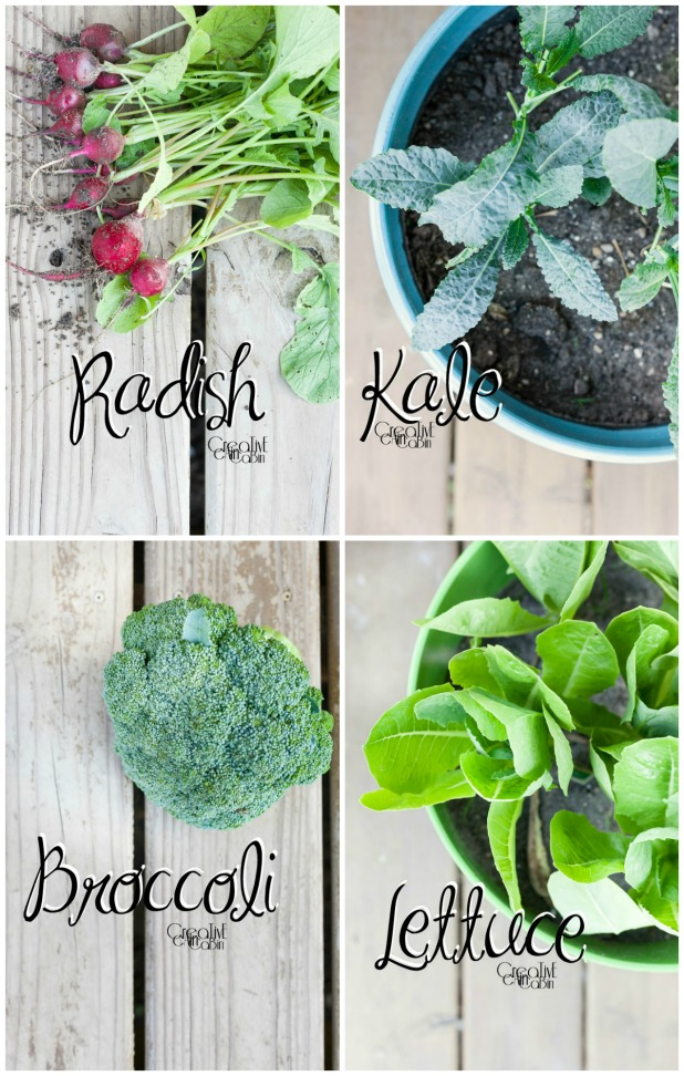 Container Garden Plants | Kale | Lettuce | Radish | Broccoli | Organic Vegetables | Garden | Vegetable Garden | Harvest | CreativeCainCabin.com