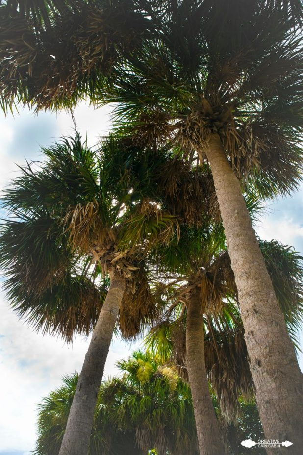 Palm Trees | CreativeCainCabin.com