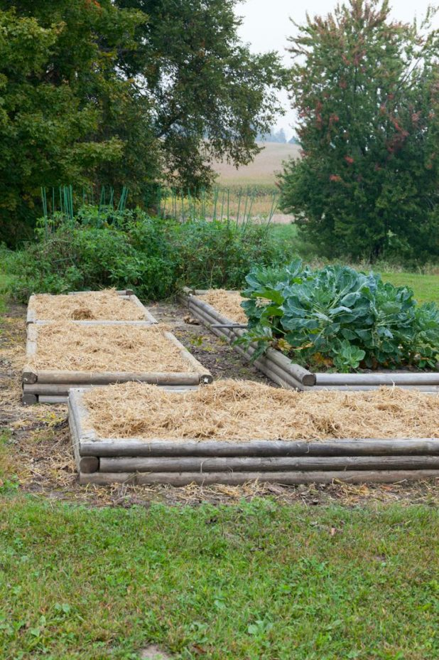 In the Fall When My Raised Bed Garden is Done Producing I Pull the Plants, Add Moo Poo to Each Bed, and Cover with Straw For the Winter. It Makes Planting Easier in the Spring.