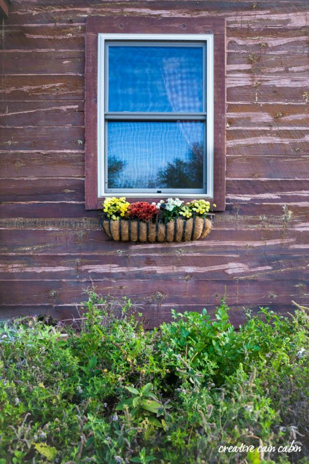 Simple Fall Window Box Planted with Mums Against the Rustic Backdrop of a Log Home