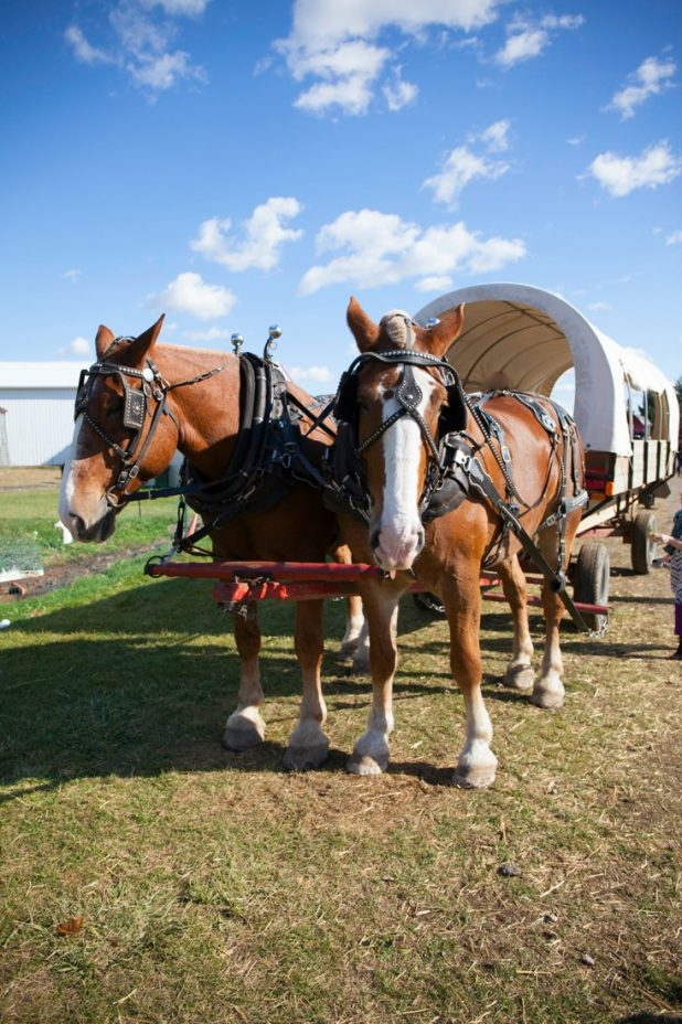 Apple Picking Season in Michigan. Beautiful Fall Color to See and a Covered Wagon Ride Into the Orchard