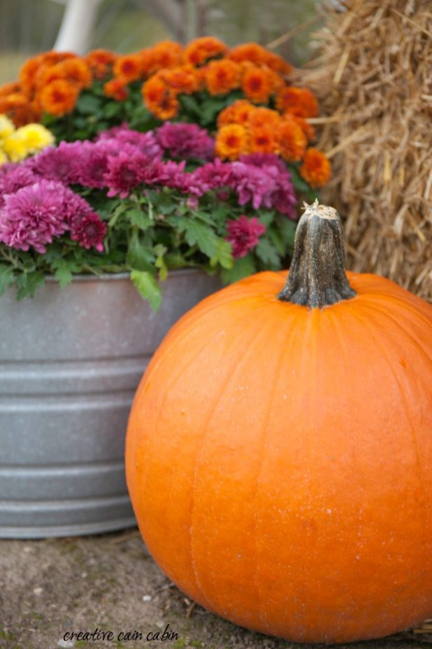Simple Fall Decor Using Mums in Galvanized Buckets, Pumpkins, and a Vintage Bike