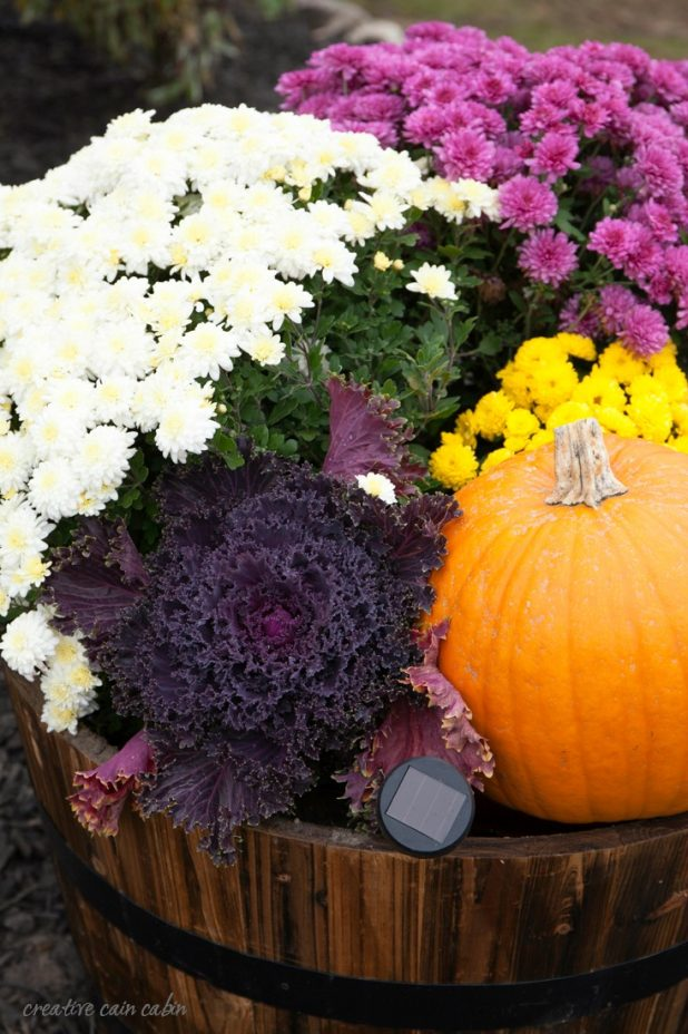 Whiskey Barrel Decorate For Fall Using Mums, Pumpkins, and Kale with a Small Solar Landscape Light to Show it All Off at Night