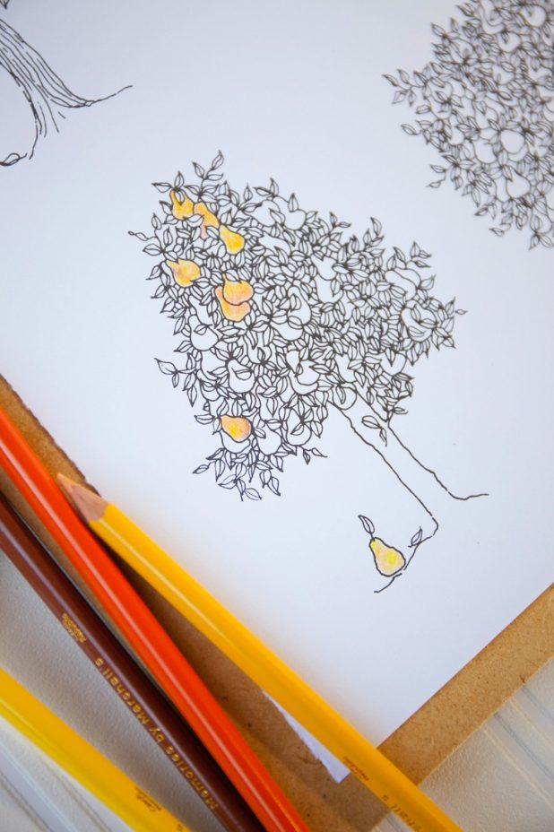 What to look for when picking an adult coloring book