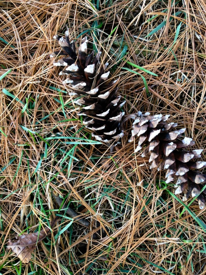 Leila Arboretum Entrance Battle Creek MI a Great Place to Gather Pine Cones for Wreath Making