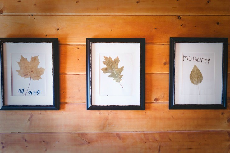 Press Leaves with your Kids and Frame them as Artwork for Fall