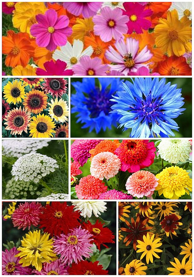 Best Flower to Plant for A Cut Flower Garden