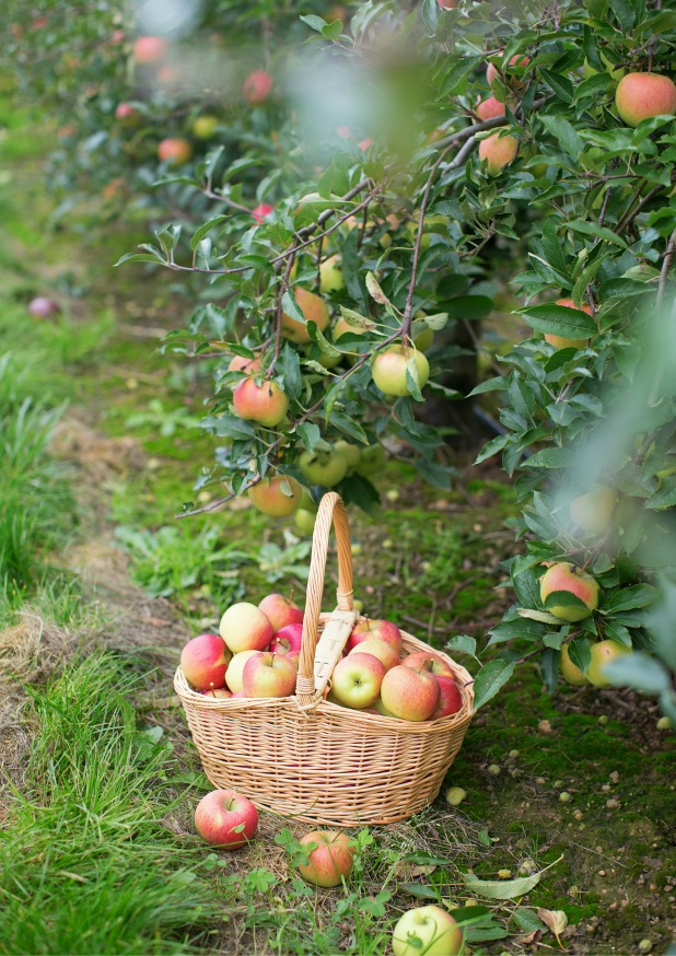 What to Do To Get Fruit Trees to Blossom and Produce Fruit
