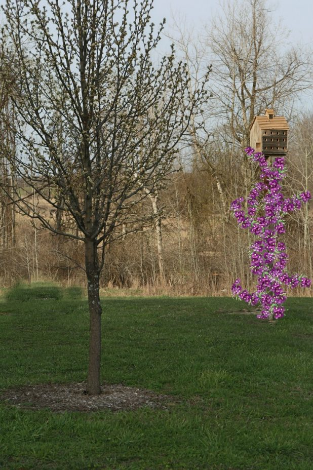 Purple Martin House with Purple Clematis Vine