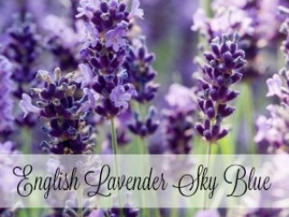 English Lavender Sky Blue