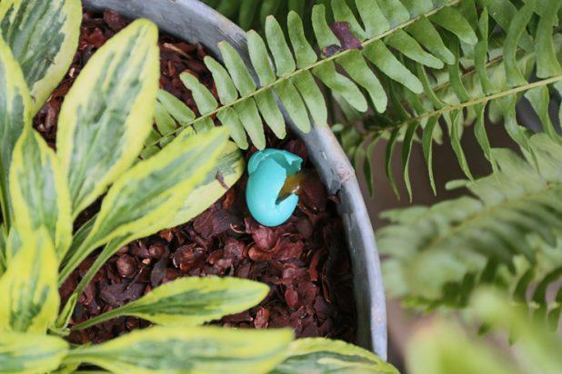 Broken Robins Egg
