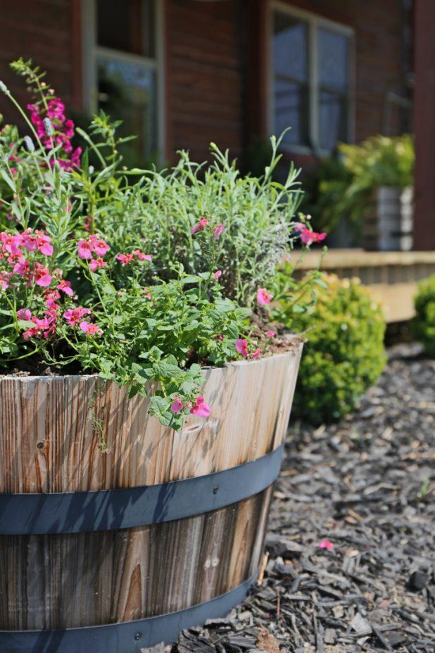 Summer Whiskey Barrel Planted with Lavender, Angelonia, and Diascia