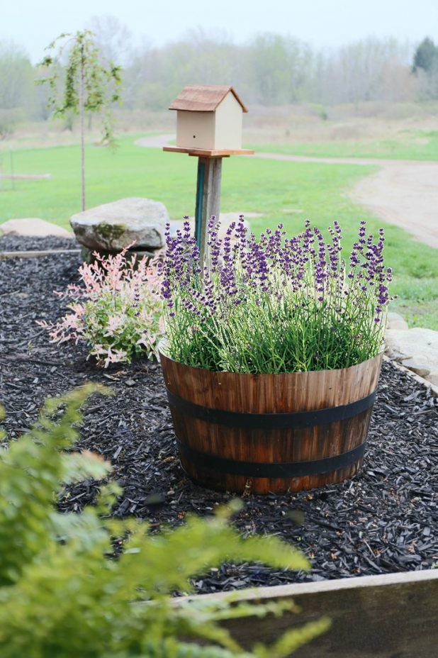 Flamingo Willow and Lavender Whiskey Barrel Landscape Additions